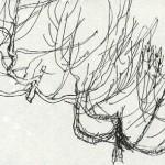 2 tumbleweed - Copy