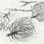 3 tumbleweed - Copy